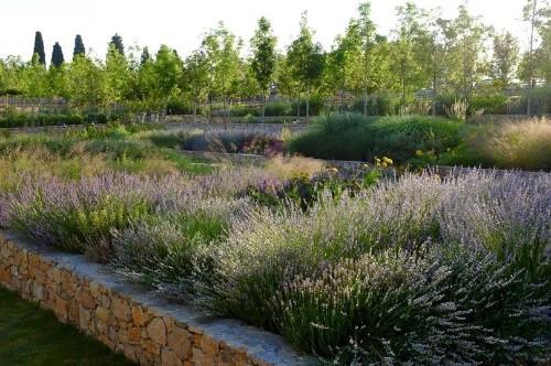Gardening 101: Lavender