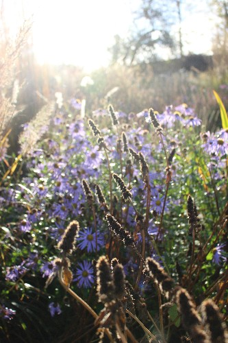 Your First Garden: What You Need to Know About Cutting Back Perennials in the Fall