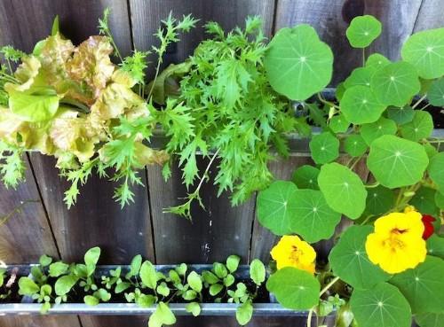 The Easiest Urban Garden?