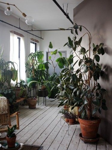 The Accidental Jungle: Shabd Simon-Alexander's Houseplants in a New York Apartment