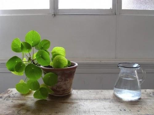11 Ways to Keep Houseplants Happy in Winter