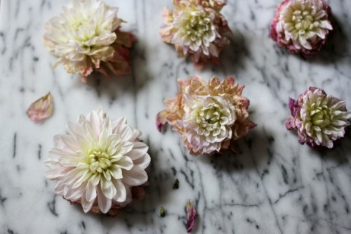 Tried and Tested: How to Make Fresh Flowers Last Longer