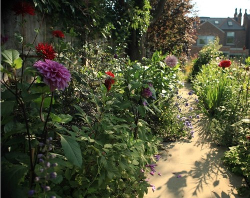 Dahlia Days: Sam McKnight's Spectacular September Garden