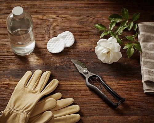 Gardening 101: How to Prune Roses