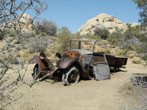 Joshua Tree National Park: Not Your Mother's Arboretum