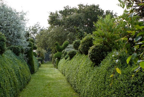 Landscaping 101: How to Tame Overgrown Shrubs