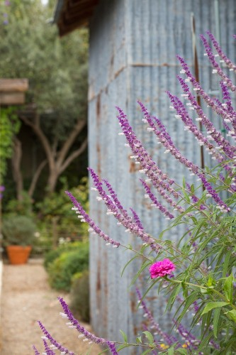Outbuilding of the Week: A Salvaged Shed in a Napa Garden