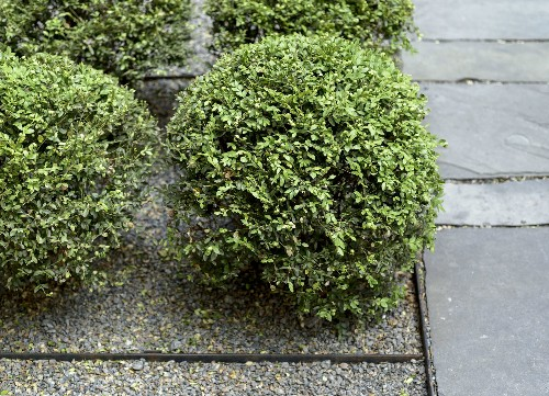 10 Things Your Landscape Designer Wishes You Knew About Gravel (But Is Too Polite to Tell You)