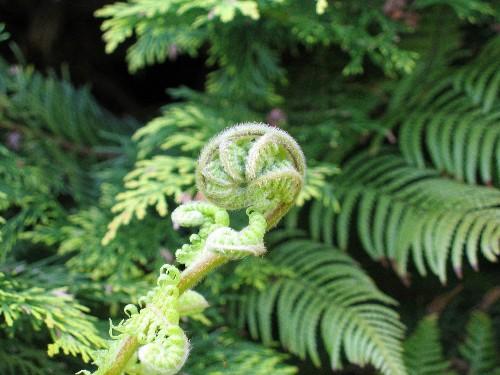 Gardening 101: Tree Ferns
