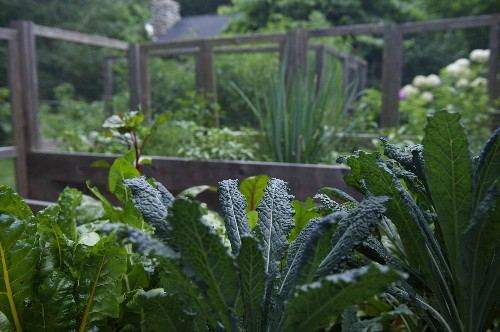 Garden-to-Table Recipe from a Cook's Garden: Eat Your Greens