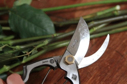 DIY: How to Clean and Care for Garden Pruners