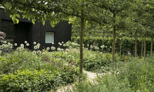 Gatehouse Garden: A Dramatic Black Backdrop for a White Wildflower Meadow