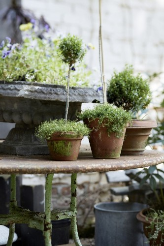 10 Garden Ideas to Steal from France