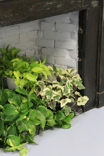 DIY: A Living Wall for the Office, Lazy Person's Edition