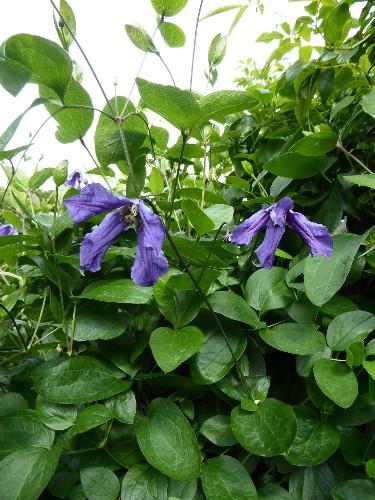 Behind the Hedges: Catherine Horwood's Hidden Kitchen Garden