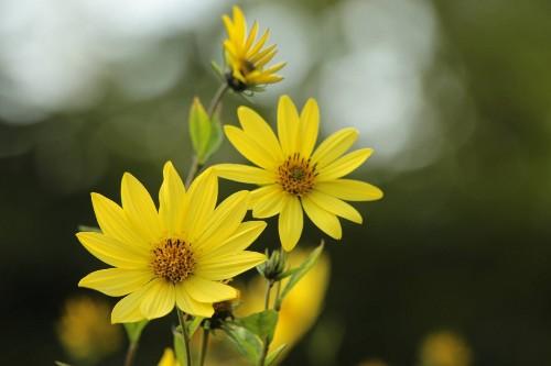 Edible Gardens: 4 Perennial Vegetables to Plant Now