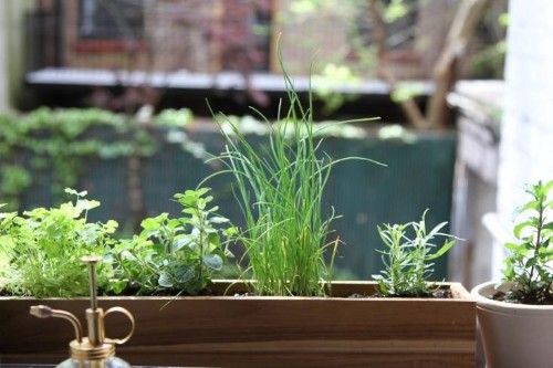 Urban Gardening: Shade-Tolerant Herbs to Grow in Your Apartment