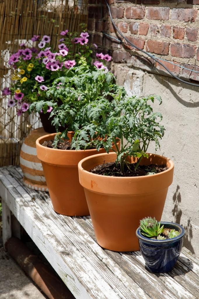 Gardening Tips - Magazine cover