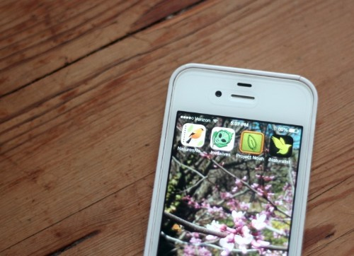 Garden Tech: Botany and Plant ID Apps for Citizen Scientists