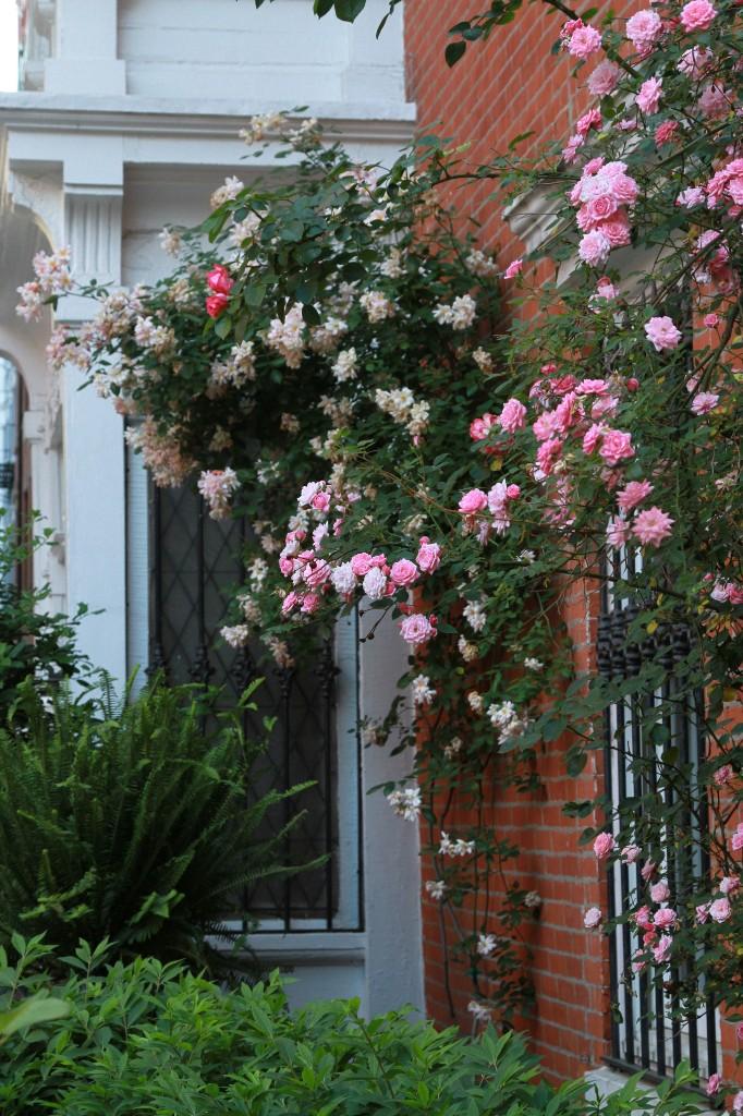 The 7 Best Climbing Roses for Your Garden - Gardenista