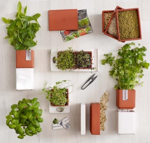 A Kitchen Garden You Can Sprout on a Countertop
