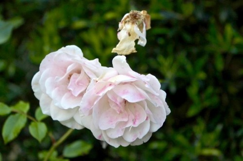 Gardening 101: How to Deadhead Flowers