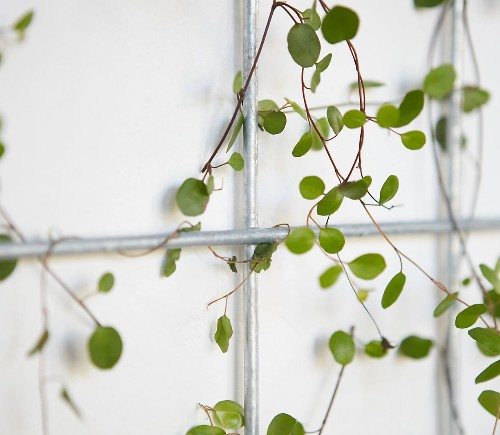 Everything You Need to Know About Trellises