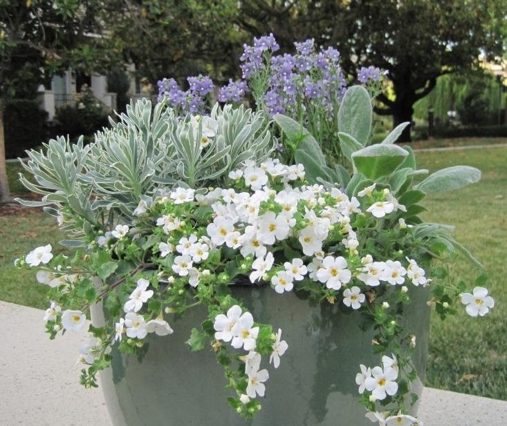 Flower Pots - Magazine cover