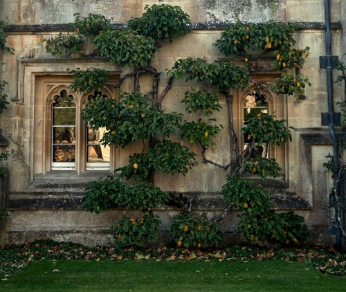 The Secret History: A Master Class in Gothic Pruning