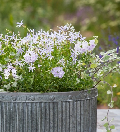 Container Gardening: Sarah Raven's 7 Tips for Perfect Flower Pots