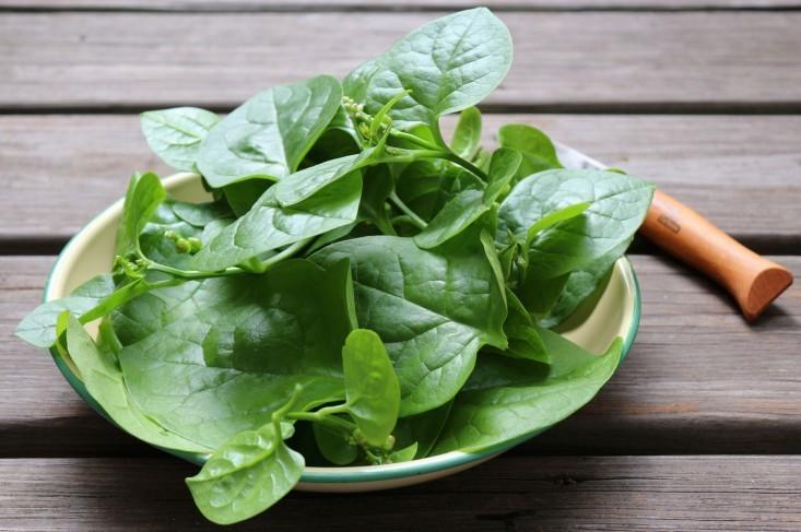 Gardening 101: Spinach - Gardenista