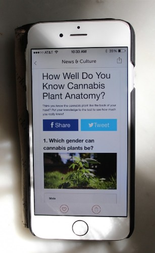 My Marijuana Plant: Best Apps and Growing Tips