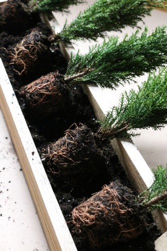 Small Space DIY: Tiny Trees for a Winter Window Box