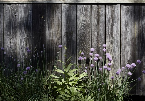 Now Trending: 9 Surprising Purple Palettes for a Garden