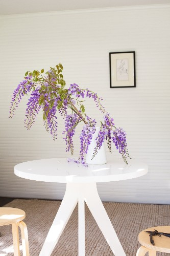 Plant of the Week: Wisteria
