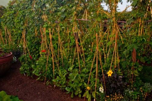Best Edible Garden 2018: Galleron Vegetable Garden by Lou Penning Landscapes