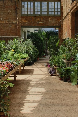 Where Florists Go to Buy Their Plants