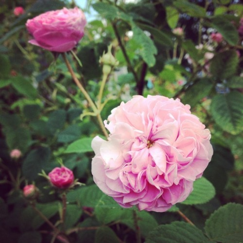 Vote for the Best Edible Garden in the Gardenista Considered Design Awards