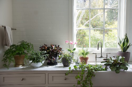 Best Houseplants: 9 Indoor Plants for Low Light