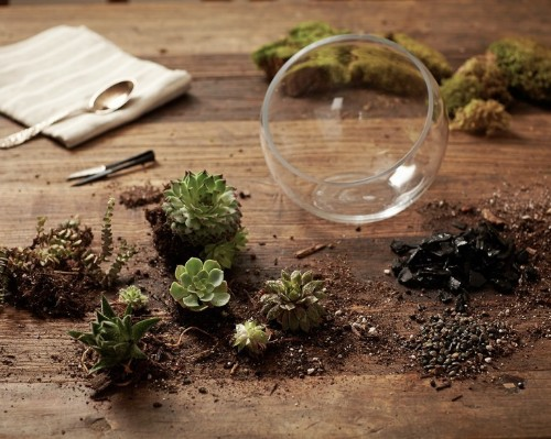 Gardening 101: How to Plant an Open Terrarium