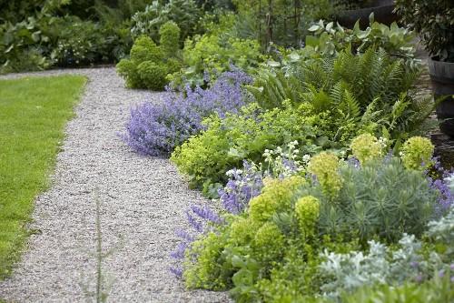 Gardening 101: Lady's Mantle