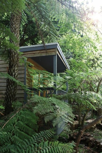 Garden Visit: A Fern-Filled Forest in Australia