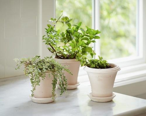 DIY: Instant Indoor Herb Garden