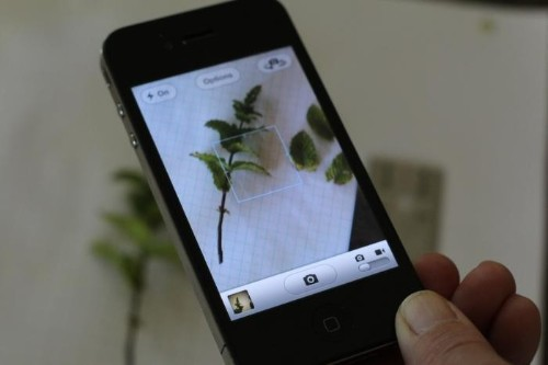 Trend Alert: 10 Essential Gardening Apps to Download Now