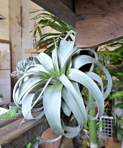Gardening 101: Air Plants