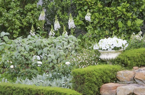 Quicksilver: 11 Plants for a Silvery Gray Garden