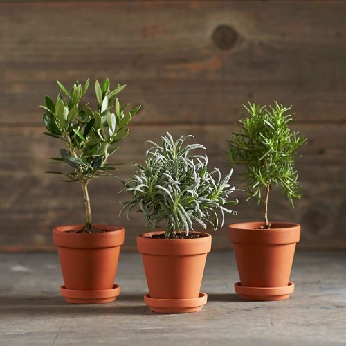 Gift Guide: Tiny Topiaries for the Apartment Dweller