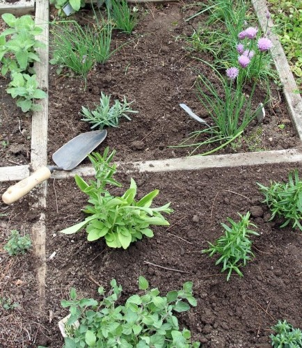 The Garden Decoder: What Is 'Square Foot Gardening'?
