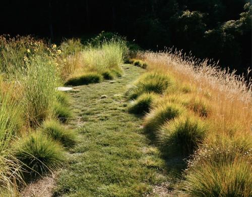 Expert Advice: 8 Tips for a Meadow Garden from Grass Guru John Greenlee