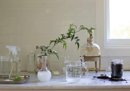 Homemade Remedies: 5 Natural Garden Helpers